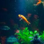 Pokarmy dla rybek – jakie będą właściwe?